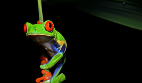 Photo of tree frog