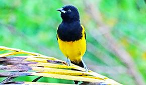 photo of tropical bird